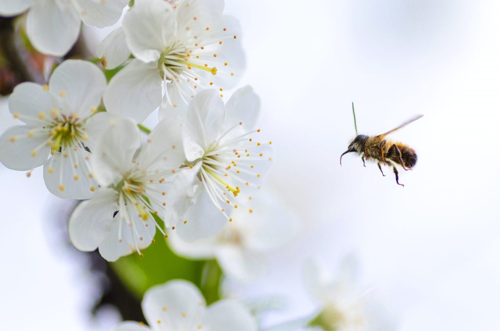 Air Purifiers Against Pollen Allergies